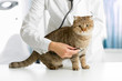 Cat in veterinarian clinic - 77075229