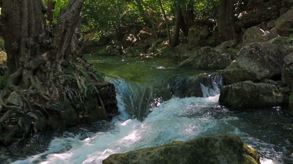 River Stream In Green Forest
