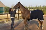Amico cavallo 11