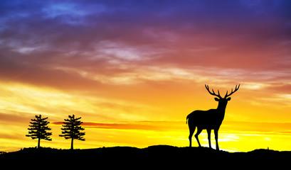 ciervo en el monte