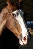 Amico cavallo 5