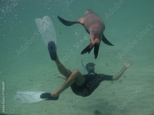 sea lion and snorkeler