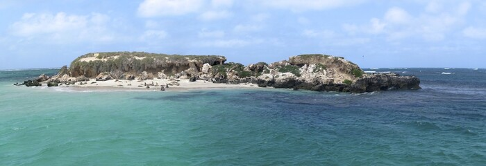 sea lion colony, Jurien Bay, West Australia