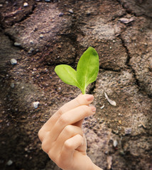 woman hand holding plant in soil