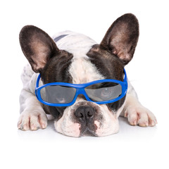 French bulldog in blue glasses isolated on white background