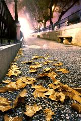 Calle de la ciudad por la noche,hojas en el suelo