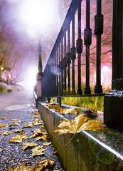 Calle en ciudad por la noche, hojas en el suelo y farola