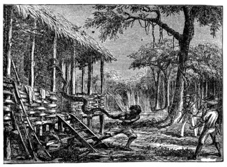 Victorian engraving of a huge snake in a jungle village