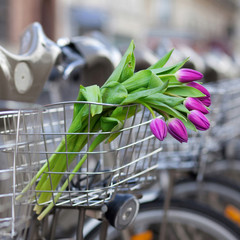Spring is coming! Bunch of tulips in basket of Parisian public b