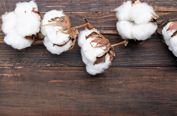 Cotton branch on the wooden table