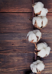 Cotton brunch on the wooden background