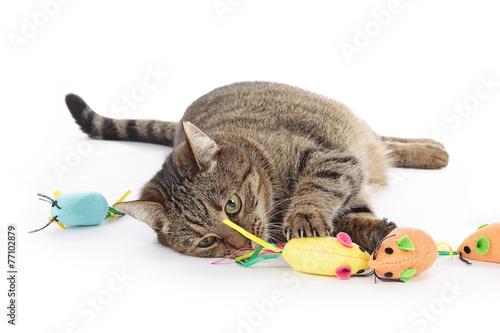 Poster Kat chat jouant avec souris