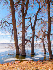 Winter Shore at Barr Lake 2