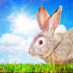 Rabbit on a green grass against sunny sky.