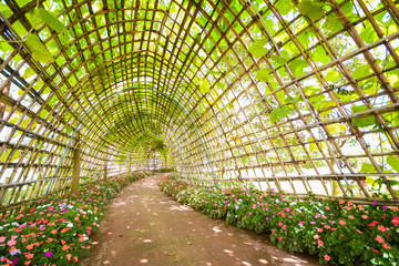 beautiful tunnel from plant in flora park