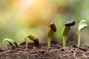 seed root on soil with sunbeam new life concept
