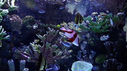 Colorful Fishes in Big Aquarium