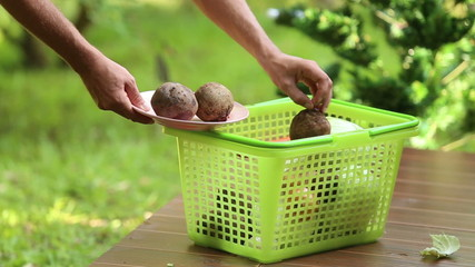 man gaining only beet from basket for cooking traditional ukrain