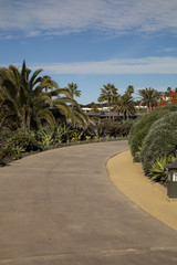 Laguna Beach Path