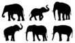 elephant silhouettes - 77134214