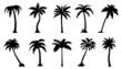palm silhouttes