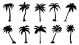 Photo: palm silhouttes