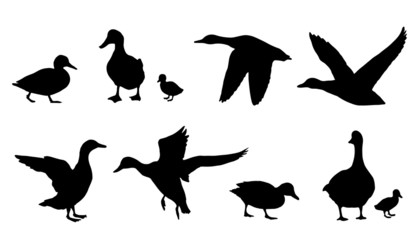 duck silhouettes