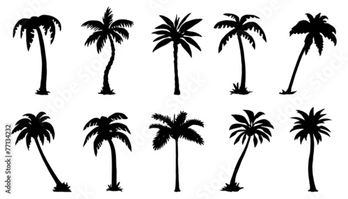 palm silhouttes - 77134232