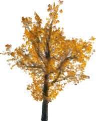 illustration with golden fall oak isolated on white