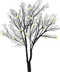 spring tree with small flowers on white