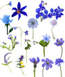 sixteen blue flowers collection