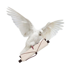 flying isolated white dove with light scroll