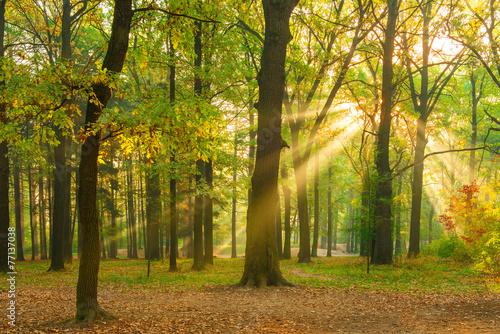 Aluminium Bossen bright rays of the sun in the morning empty forest