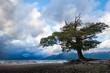 Tenaciuos Tree, Lake Tea Anau, NZ