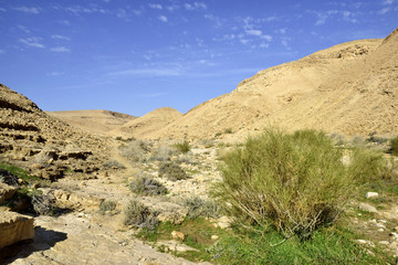Nahal Zafit at winter, Negev desert.