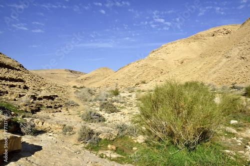poster of Nahal Zafit at winter, Negev desert.