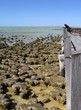 Stromatolites - Shark Bay World Heritage Area - 77146288