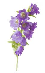 Bluebells flowers closeup