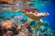Leinwandbild Motiv Hawksbill Turtle - Eretmochelys imbricata