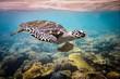 Leinwanddruck Bild - Hawksbill Turtle - Eretmochelys imbricata