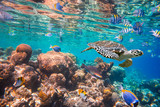 Hawksbill Turtle - Eretmochelys imbricata - 77146676
