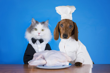 cat and dachshund going to the kitchen to cook chicken