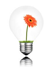 Orange Gerbera Flower Growing inside Light Bulb Isolated