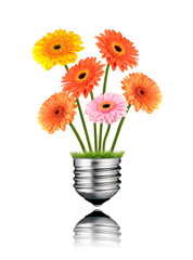 Gerbera Flowers Growing out of Light Bulb Screw Isolated
