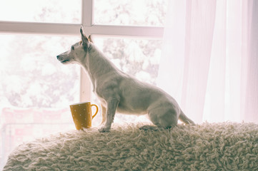 Cute dog sitting with mug and look out for snow