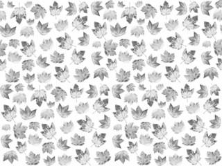 Hintergrund Ahornblätter, schwarzweiß