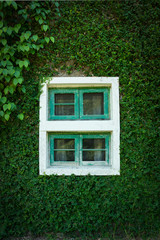 Grass wall with old window.