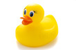 Yellow rubber duck on White Background - 77161464