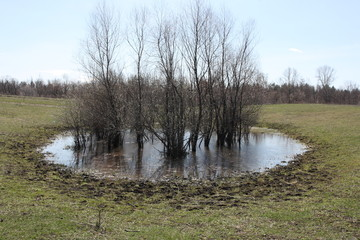 Spring puddle with flooded trees in the late April sunny day