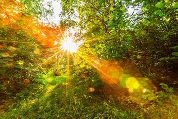 Sunset sunshine in forest